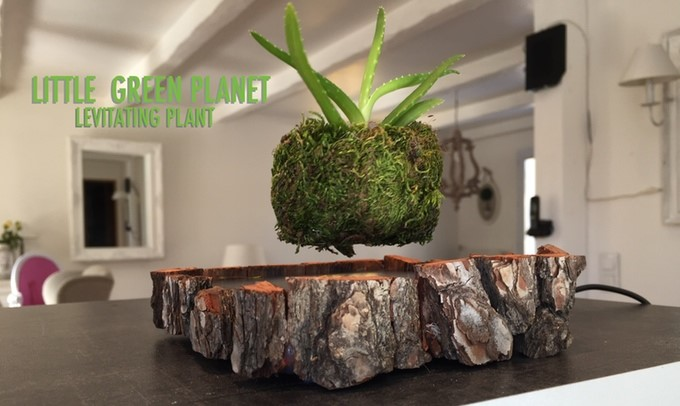 Proyecto Little Green Planet - Levitating Air Plant
