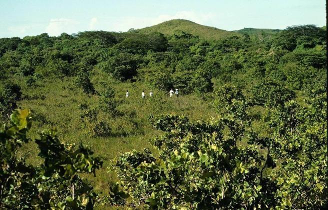 Este es el bosque que fue cubierto con cáscaras y pulpa de naranja. Fuente: Universidad de Princeton